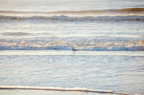 Shore2021-41.jpg