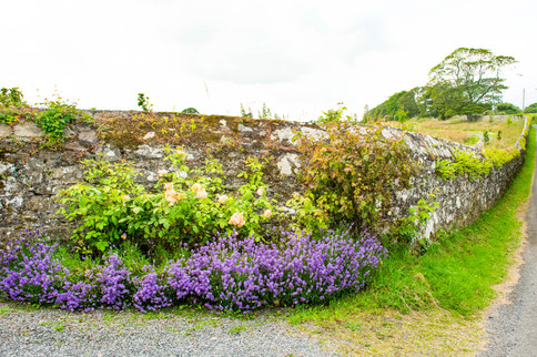 Ireland-115.jpg