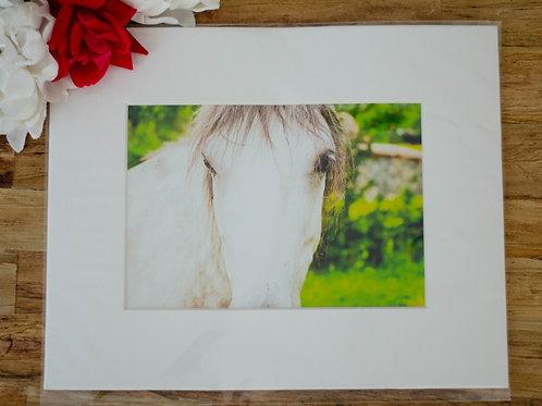 WHITE HORSE - 5x7