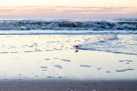 Shore2021-24.jpg