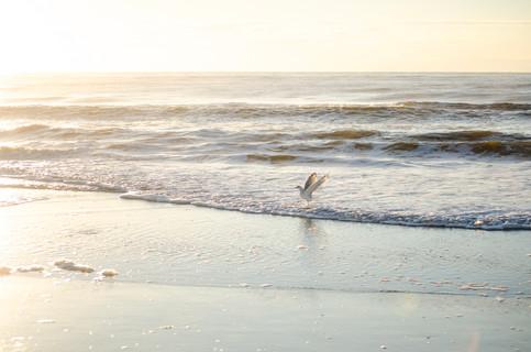 Shore2021-44.jpg