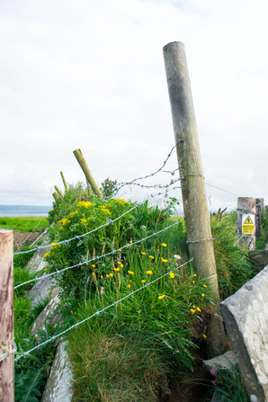 WIRE BY THE CLIFFS