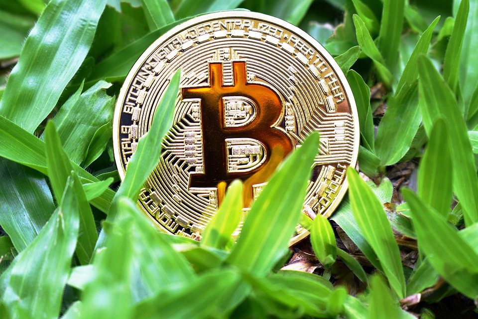 bitcoin-grow.jpg