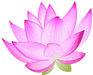 pink_lotus.png