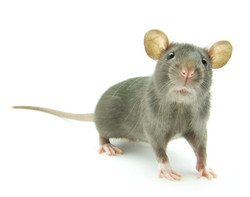 mouse 2.jpg