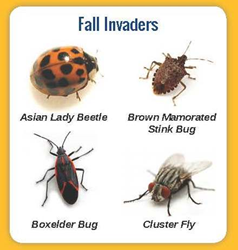Fall Invaders
