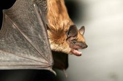 bat 2.jpg
