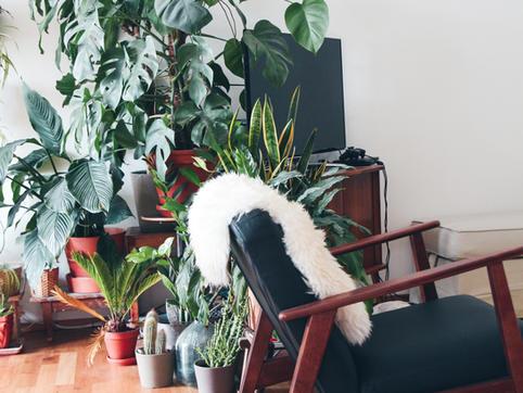 Indoor + Outdoor Plant Scaping
