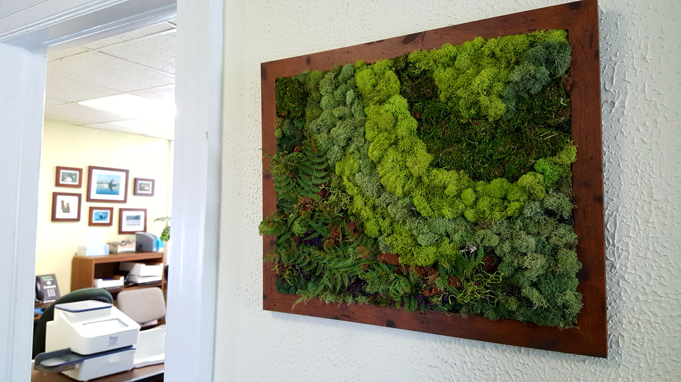 Custom-Made Moss Panels 1