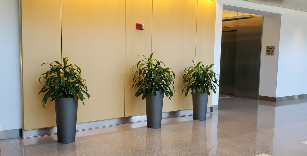 Expert Plant Maintenance