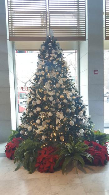 Christmas Trees and Fresh Poinsettias