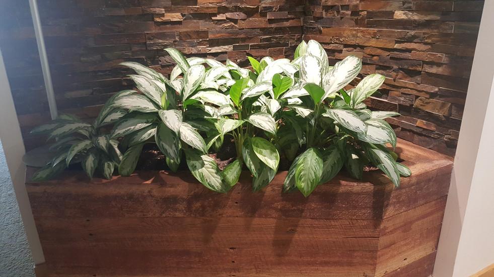 Custom-Built Planters