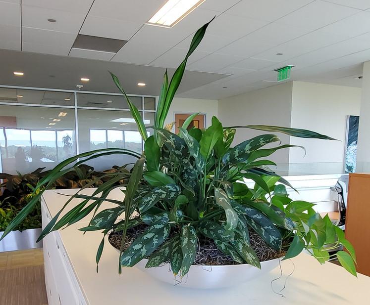 Desktop Plant Bowls