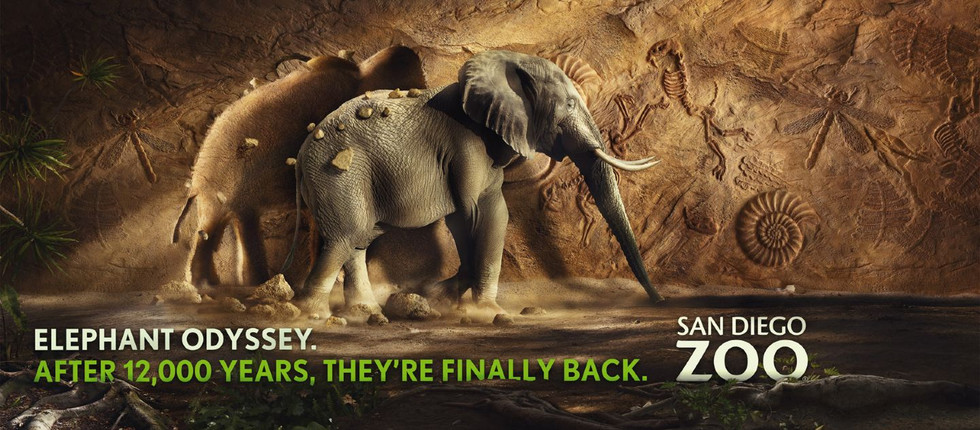 Agency: M&C Saatchi   Client: San Diego Zoo