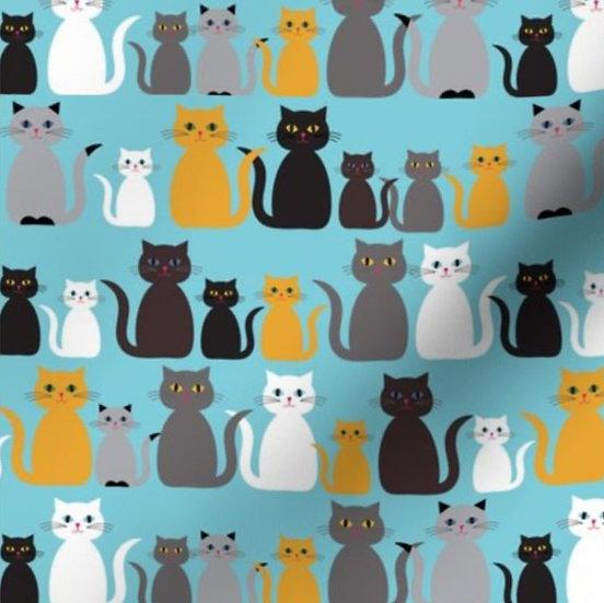 Rows of Kitten