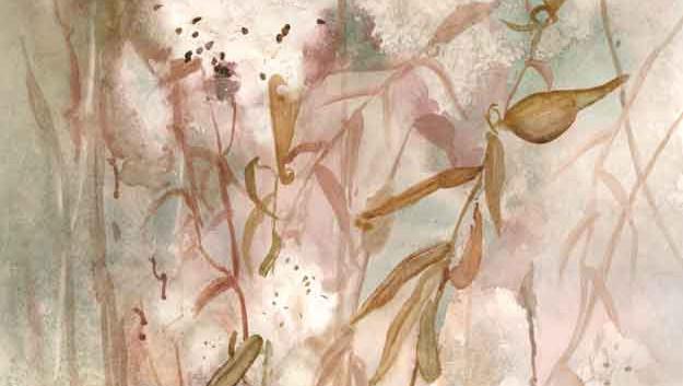 Milkweed Silk