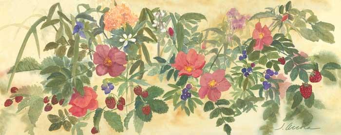 Berries & Botanicals