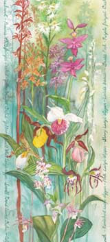 Orchids of North American