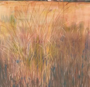 Copper Grass: Sorgastrum Nutans
