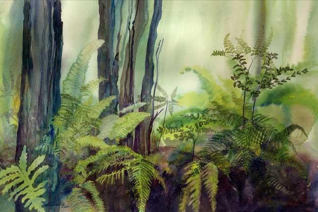 Woodland Ferns