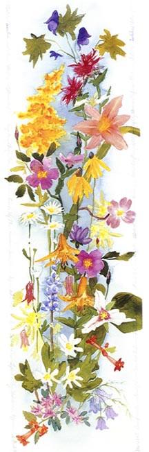 American Wildflowers II