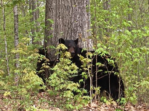 Visiting bears
