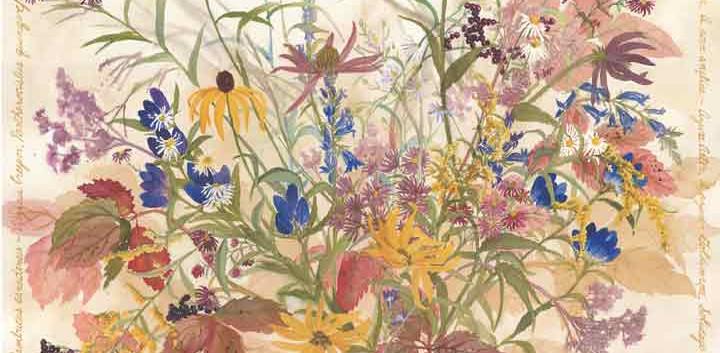 September Wildflowers