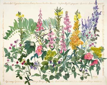 Edwardian Herbal