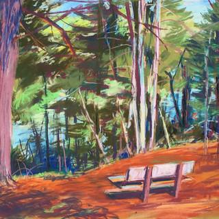 Carson Park Bench