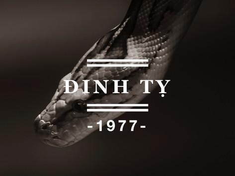 Người sinh năm Đinh Tỵ 1977 nên đeo đá quý màu gì ? Tư vấn đá phong thủy cho người sinh năm 1977