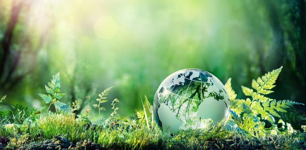 Become a green company with Quik! Forms Automation Software. Peaceful forest image with a glass globe in the grass.