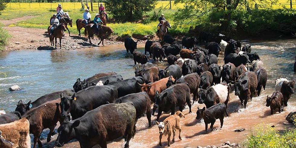 Cattle Drive Weekend