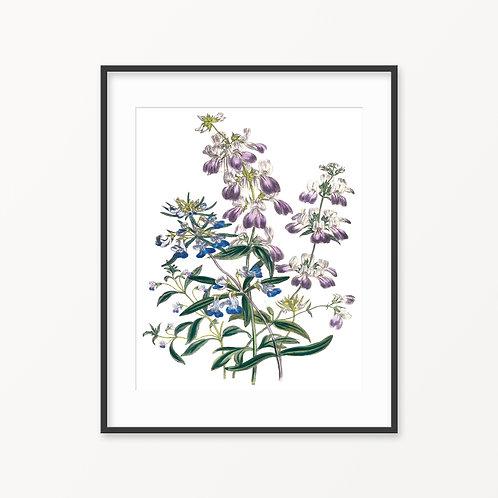Vintage Botanical Print - 94