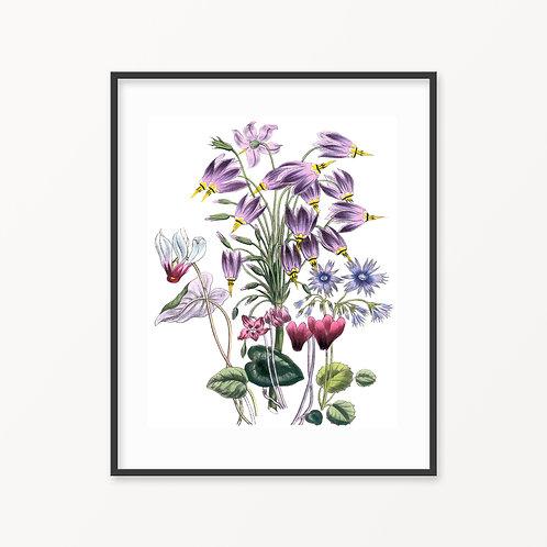 Vintage Botanical Print - 189