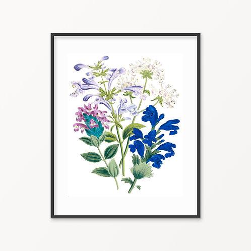 Vintage Botanical Print - 187
