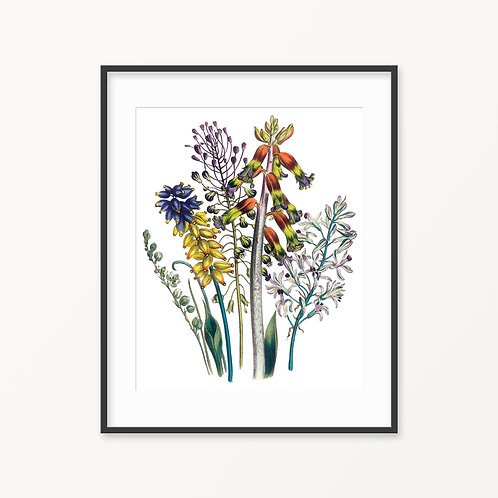 Vintage Botanical Print - 46