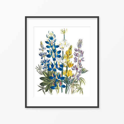 Vintage Botanical Print - 75
