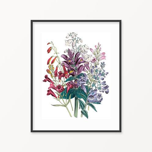 Vintage Botanical Print - 185