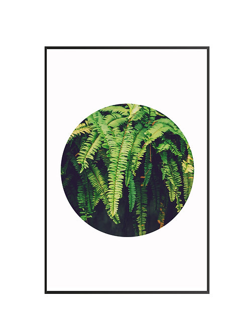 Fern Circle Print M21