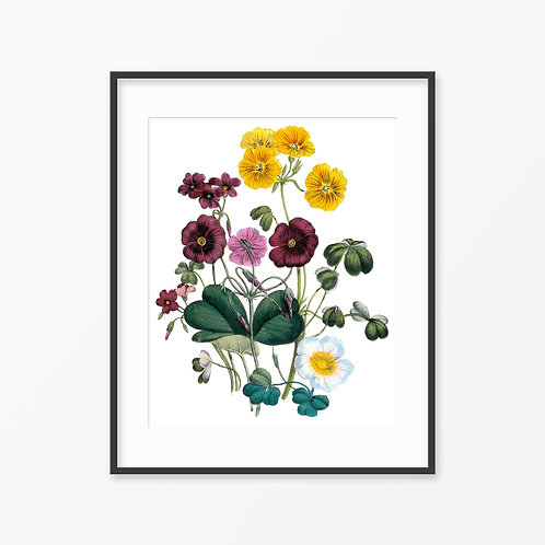Vintage Botanical Print - 132
