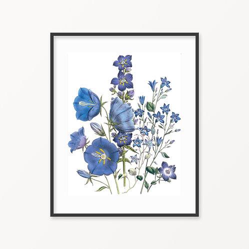 Vintage Botanical Print - 161