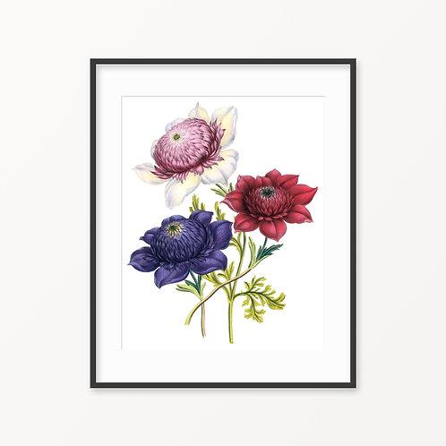 Vintage Botanical Print - 124