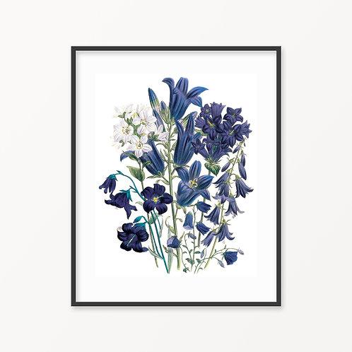 Vintage Botanical Print - 159