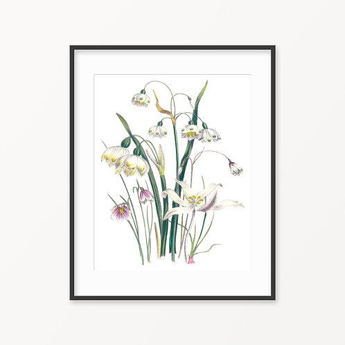 Vintage Botanical Print - 39