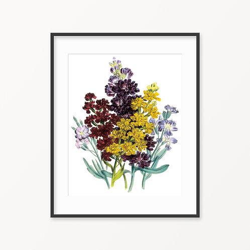 Vintage Botanical Print - 119