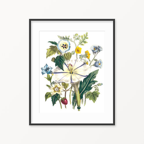 Vintage Botanical Print - 98