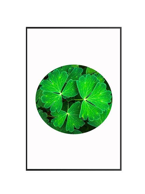 Green Herb M31