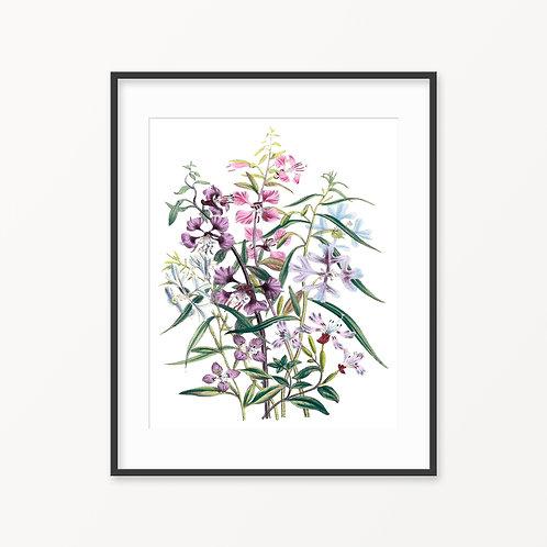 Vintage Botanical Print - 63