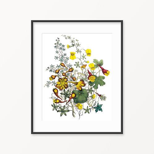 Vintage Botanical Print - 131