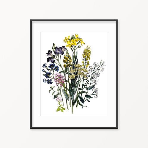 Vintage Botanical Print - 117
